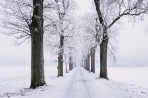 Odds på hvid jul